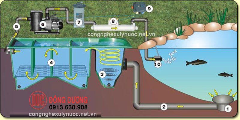 Mô hình xử lý bể cá koi lớn