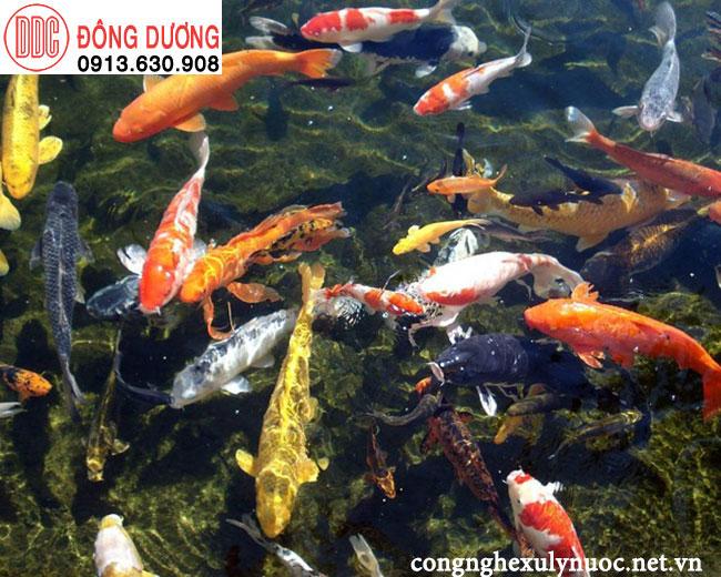 Mật độ cá trong hồ không quá cao
